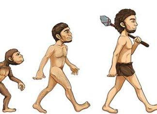 De evolutie van de mens